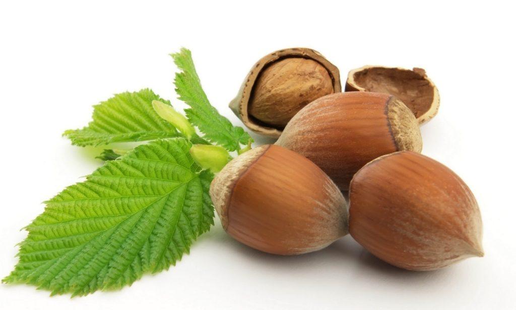 Польза и вред орехов лесной орех